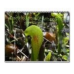 Darlingtonia Californica/pitcher plant/cobra plant/carnivorous plant